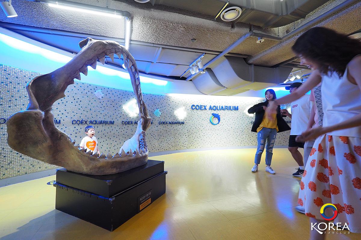 Coex Aquarium พิพิธภัณฑ์สัตว์น้ำ