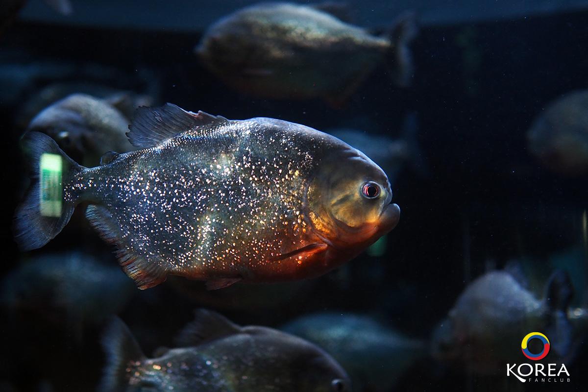 เที่ยวเกาหลี Coex Aquarium