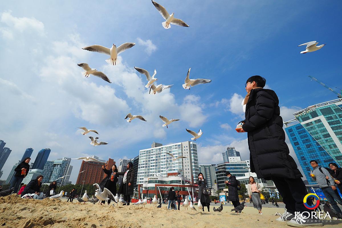ชายหาด แฮอุนแด