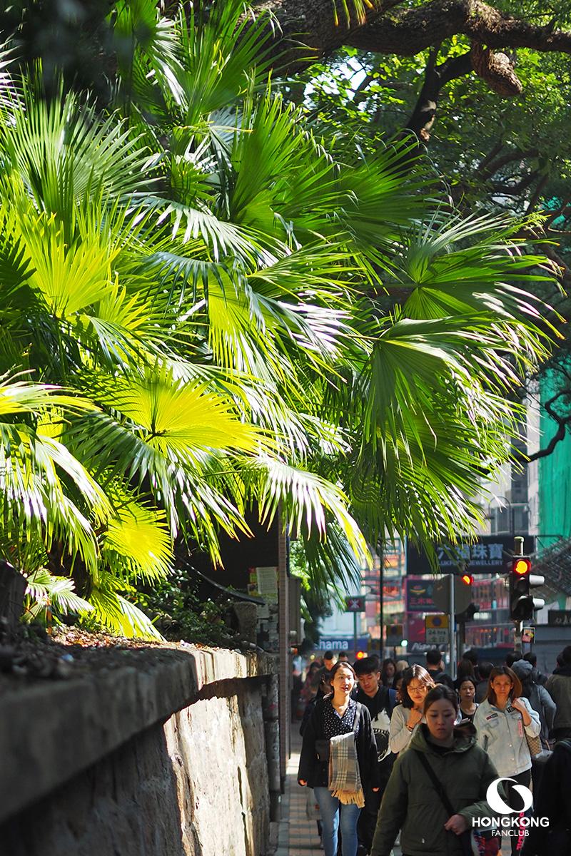 Haiphong street