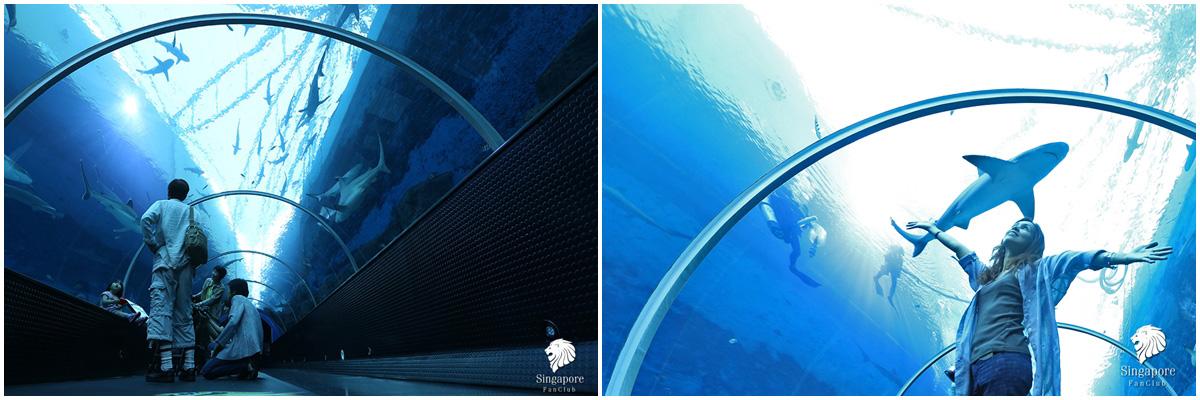 พิพิธภัณฑ์สัตว์น้ำ S.E.A. Aquarium