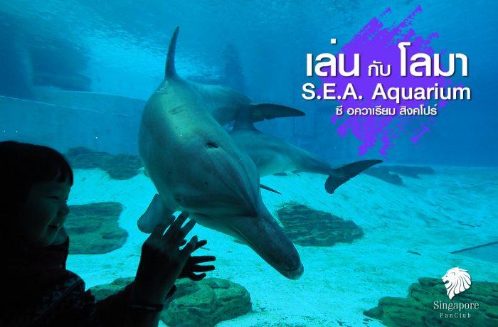 โลมา แสนรู้ : S.E.A. Aquarium สิงคโปร์